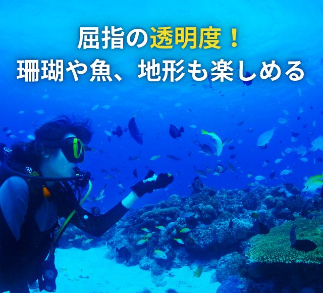 屈指の透明度! 珊瑚や魚、地形も楽しめる