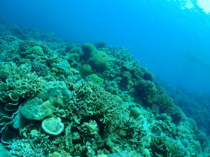 珊瑚モリモリ