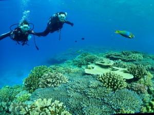 珊瑚モリモリ水納島